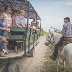 Guided tour in a horse-drawn carriage with bull animation - departure at 10:00 am