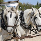 Guided tour in a horse-drawn carriage (10 am)